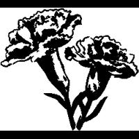 F4 – Carnations – 59