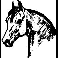 E5 – Horse – 2 – 101