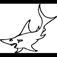 M27 – Shark – 144