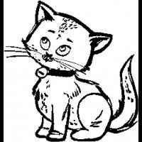 X2 – Cat – 37